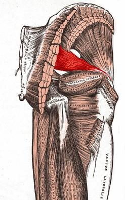 Piriformis Muscle Sciatica