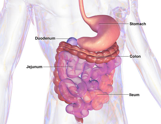 Gut Health Microbiome
