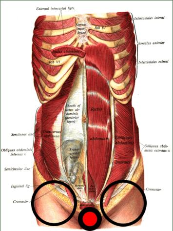 Abdominal Hip Flexors