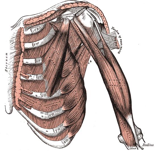 Shoulder Tendinosis Cure