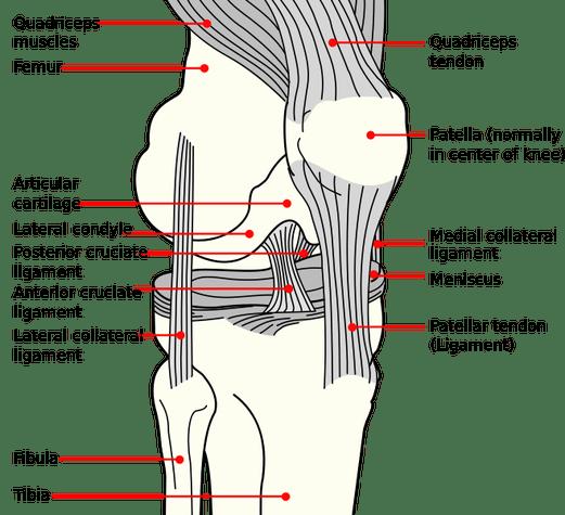 tendinosis tendonitis