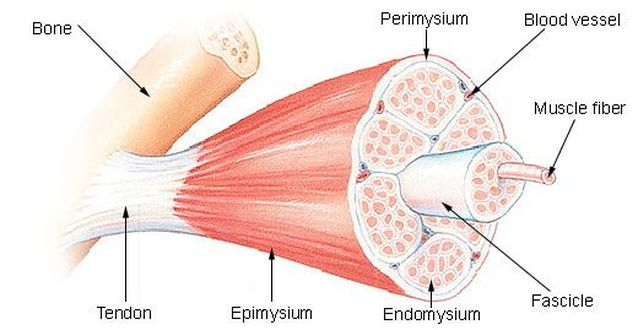 Pulled Muscle