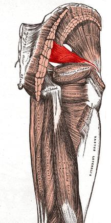 Piriformis Butt Stretches