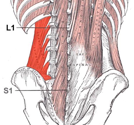 Thoraco-lumbar Fascia