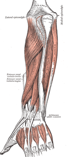 Lateral Epicondylitis, Tennis Elbow, Elbow Tendinosis