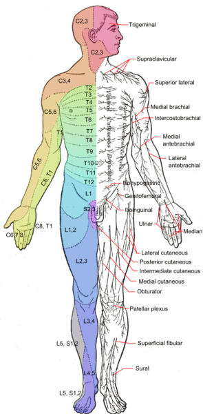 Cutaneous Nerve Entrapments