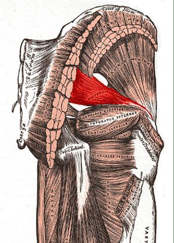 Piriformis Cluneal Nerve
