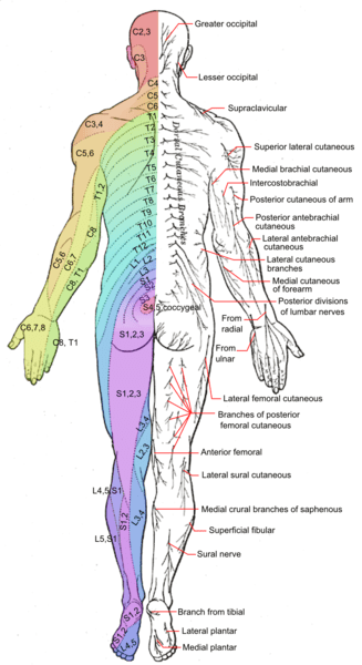 Cutaneous Nerve Entrapments Fascia