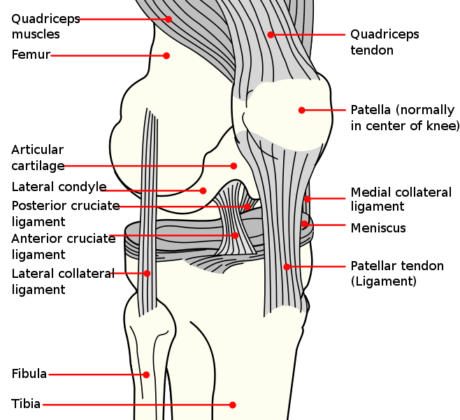 Knee Tendinosis, Patellar Tendinosis, Quadriceps Tendinosis
