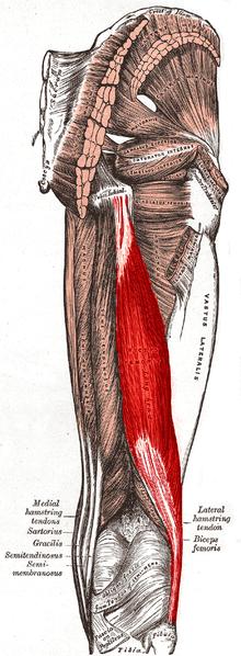 Hamstring Tendinosis