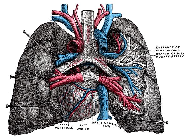 Artery Cholesterol