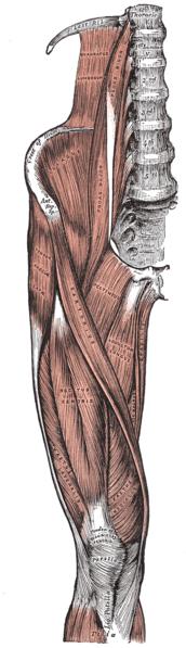 Hip Flexor Strain