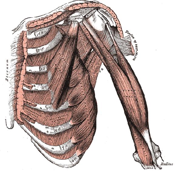 Biceps Tendinosis