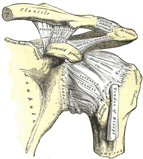 Shoulder Dislocation Shoulder Separation
