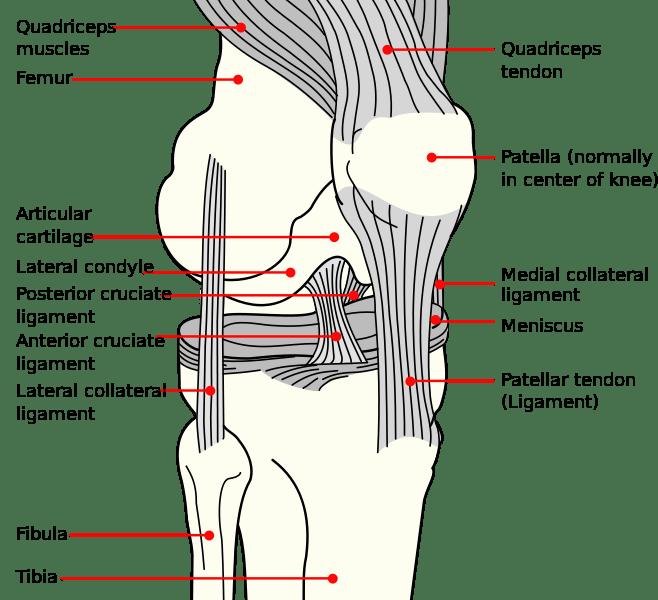 Osgood Schlatter Syndrome