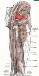 Diagnostic Test Piriformis Syndrome