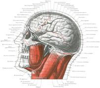 Gut Brain Microbiota Axis
