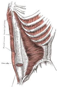 External Scar Abdomen Pain