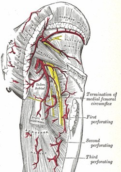 Piriformis Butt Pain