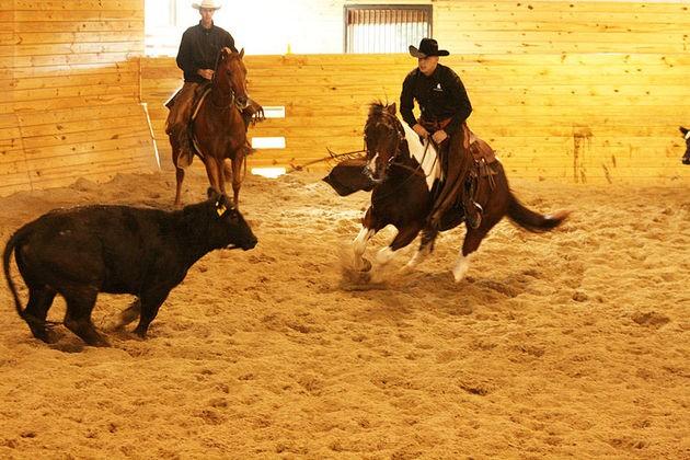 Michael Cooper Cutting Horse Trainer