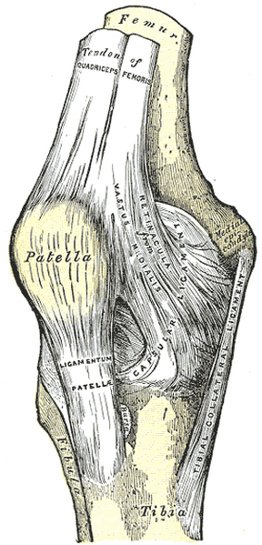 PATTELO FEMORAL PAIN SYNDROME
