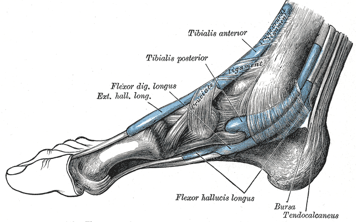 sprained ankle ligament