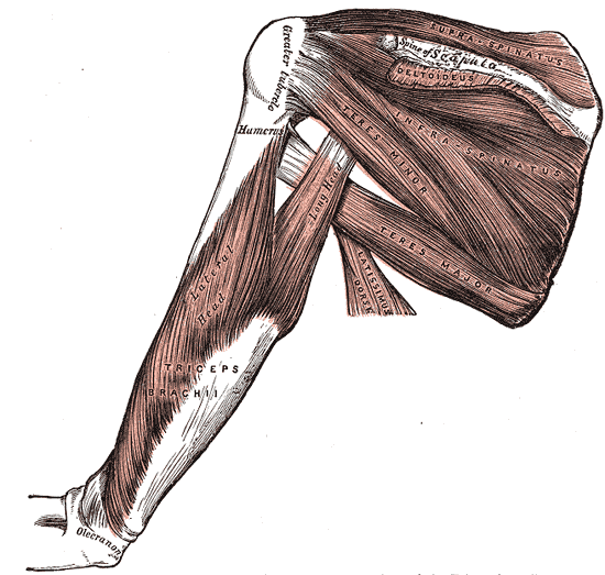Rotator Cuff Pain