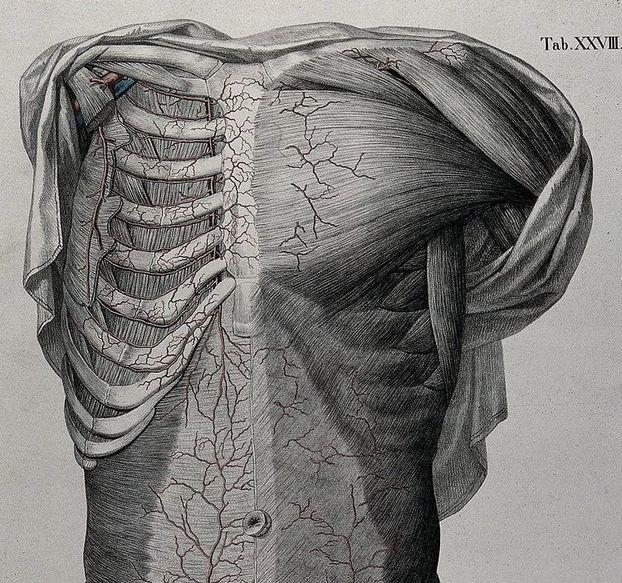Rib Tissue Pain