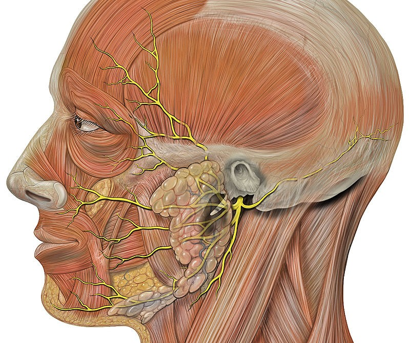 Cutaneous Nerve Entrapments Headaches