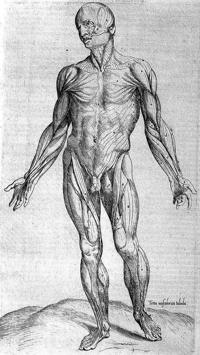 Fascia Inflammation