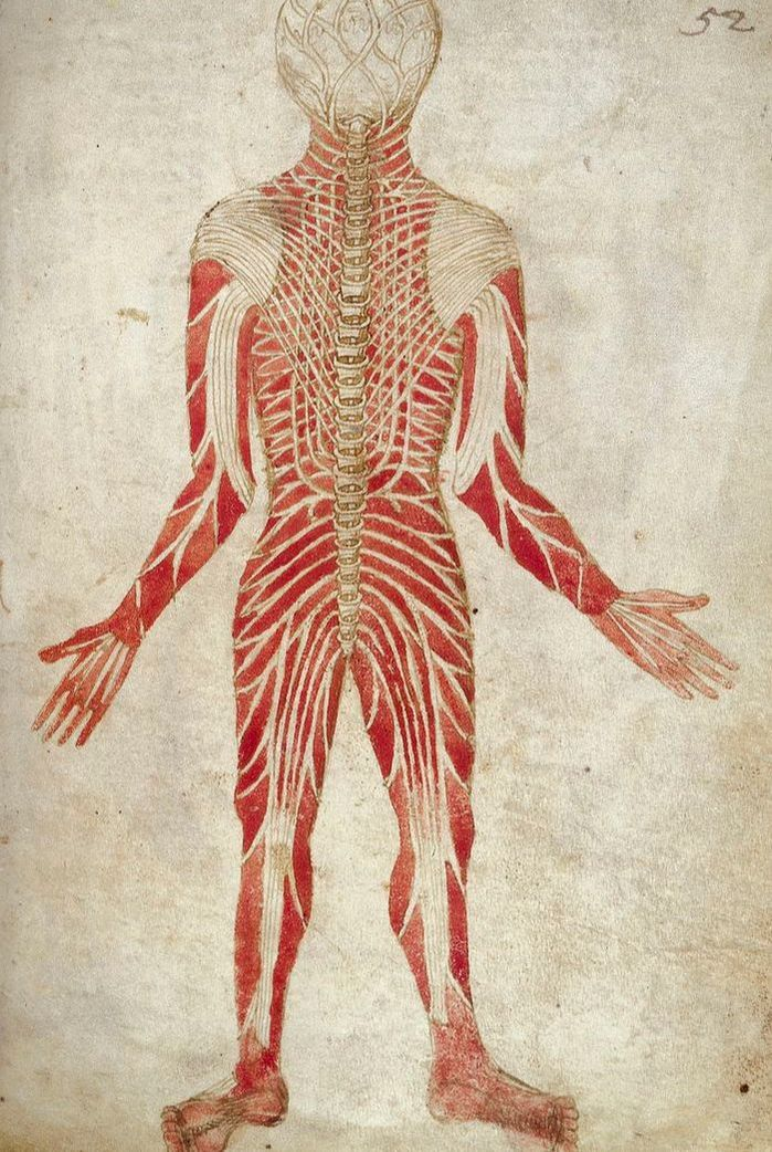 Cluneal Nerve Sciatica