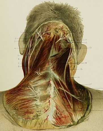 Cutaneous Nerve Entrapments Neck Pain