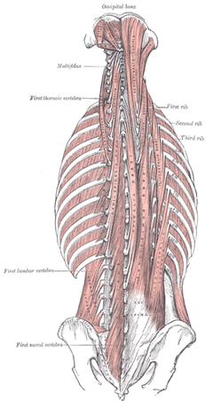 Spinal Tendinosis