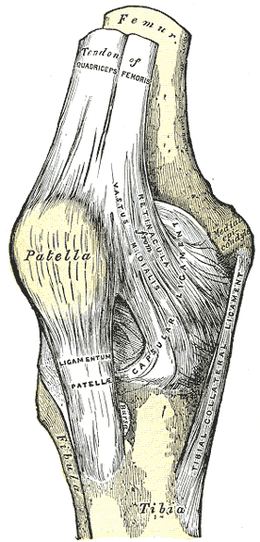 Knee Tendinosis, Quadriceps Tendinosis, Patellar Tendinosis