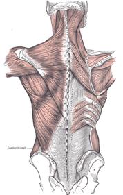 Spinal Fascia