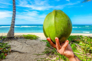 Dietary Fat / Coconut Oil
