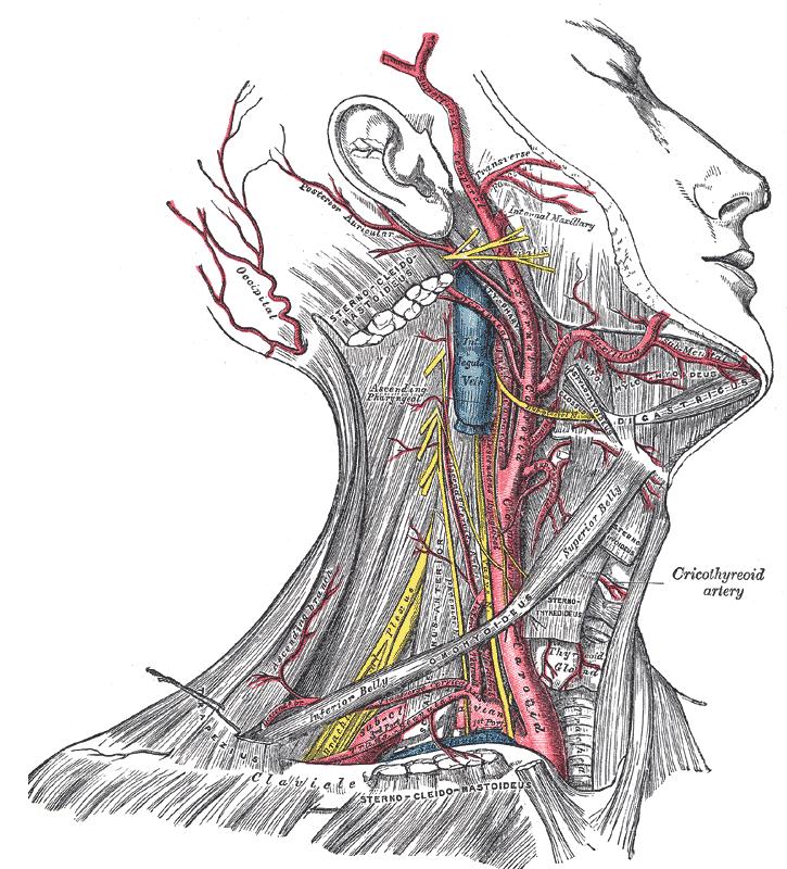 Headaches Scar Tissue