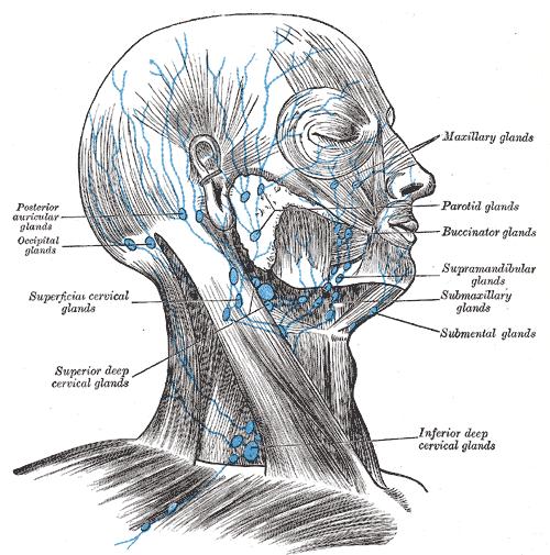 Neck Pain Scar Tissue
