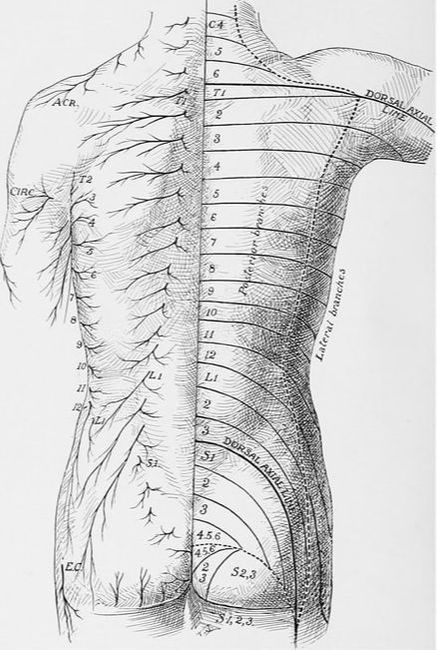Cutaneous Nerve Entrapments Fascia Pain