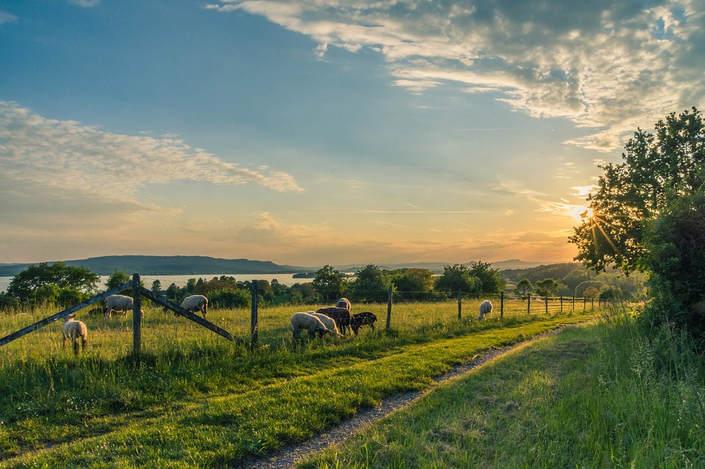 Advantages of Grass-Fed Livestock