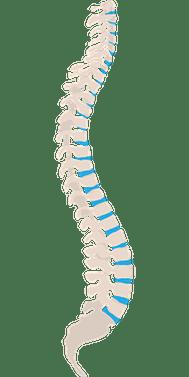 Spine Fascia