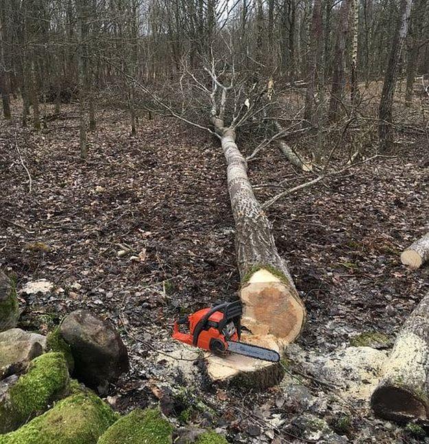 Logging Injuries