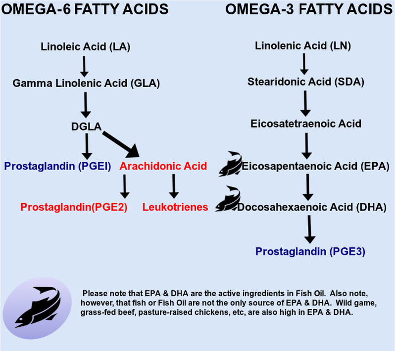Fatty Acid Metabolism and Inflammation